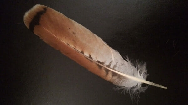 Hawk feather outside WholeSpirit Center