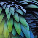 Nature's Healing Movements: Be Still or Dance Like a Bird of Paradise