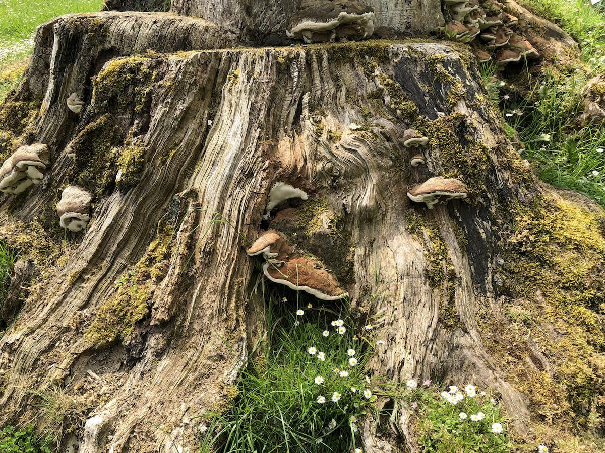 365 Journeys Circle sacred tree